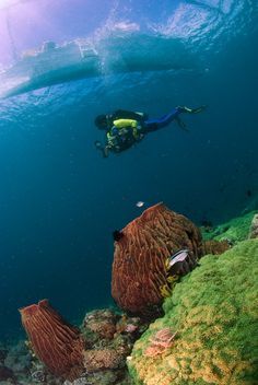 An Underwater Photographers Guide To: Anilao, Philippines