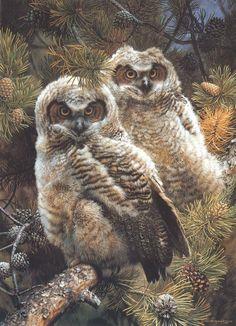 """Owl """"Hidden in the Pines"""" - Carl Brenders Wildlife Paintings, Wildlife Art, Owl Photos, Owl Pics, Great Horned Owl, Tier Fotos, Birds Of Prey, Nocturne, Bird Art"""