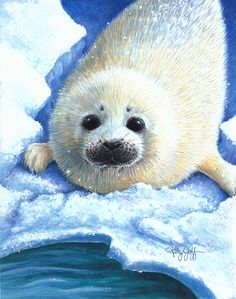 BABY SEAL BY KATHY GOFF