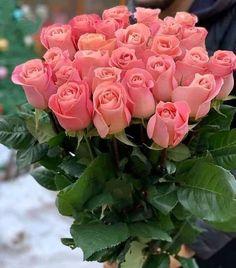 Hd Flowers, Beautiful Rose Flowers, Beautiful Flowers Pictures, Flowers Nature, Flower Pictures, Pretty Flowers, Orange Rose Bouquet, Rare Roses, Good Morning Flowers
