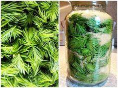 Fenyőrügy szirup ~ Receptműves Spice Mixes, Vinaigrette, Preserves, Celery, Pickles, Liquor, Herbalism, Mason Jars, Juice