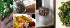 Flores de orégano: cocina, remedios y decoraciones ❀ Homemade Recipe, Salads, Plate, Recipes, Cooking, Vegetable Garden, Remedies, Homemade