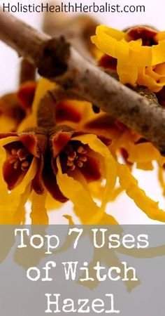The 7 Top Uses of Witch Hazel | Healthy Pin for better life