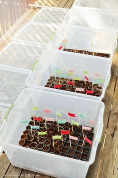 DIY greenhouses for seed starting!! Excellent idea for starting seeds in your home!