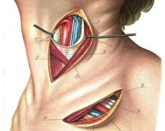 Dr. Oz reveals thyroid disease symptoms and solutions for weight loss and health: http://www.examiner.com/article/dr-oz-reveals-thyroid-disease-symptoms-and-solutions-for-weight-loss-and-health