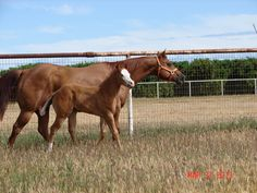 This is our Excelbration mare and foal