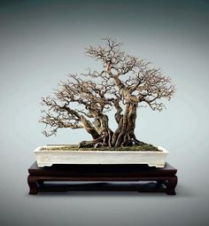 Penjing, photo by Su Fang. #penjing #bonsai #china
