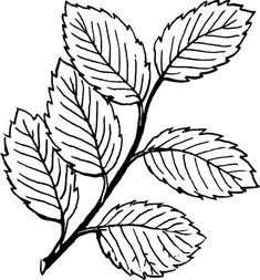 Big Tree Without Leaves Coloring Page | Tree | Leaf ...