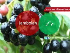 Learn English vocabulary in Urdu. English through Urdu made easy. Easiest way to learn English vocabulary in Urdu. English to Urdu Vocabulary. English Speaking Practice, English Language Learning, Learn English Words, Gre Vocabulary, English Vocabulary, Fruits Name With Picture, Fruits And Vegetables Names, Islamic Knowledge In Urdu, Fruit Names