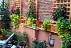 Garden With Trellis