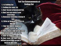 Ceiling Cat  sc 1 st  Pinterest & 59 best Basement Cat vs Ceiling Cat images on Pinterest   Basement ...