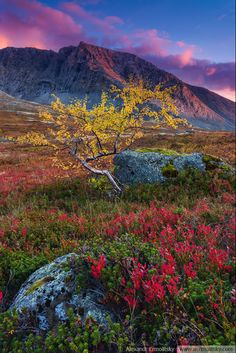 The Khibiny Mountains lie within the Kola Peninsula in Russia. It is rich in minerals due to the removal of a layer of soil during the last ice age.