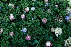 Blumenzwiebeln pflanzen Gardening, Flora, Plants, Ground Cover Plants, Shade Perennials, Planting Shrubs, Planting Bulbs, Lawn And Garden, Plant