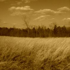 Country side..