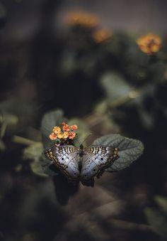 Voice of Nature - owls-n-elderberries:   Untitled by RazorBrown