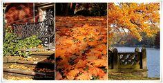 Herbsttage.... Herbstfarbe....  #EssenReisenLeben #Herbst
