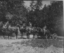 Place: Warren County (Tenn.). Description: Six mule team hauling logs to the sawmill. Date: ca. 1930. Photographer: TSLA Staff. Courtesy of the Tennessee State Library and Archives, Nashville, TN (USA).