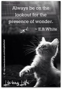 Always be on the lookout for the presence of wonder... Wonder is one of those gifts that feed Faith.