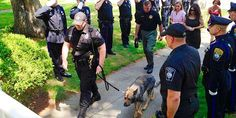 Police dogs department says solemn goodbye at final trip to the vet