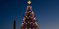 Christmas ~ The 11 Most Stunning Christmas Trees From Around The World [Huffington Post, December 22, 2013]