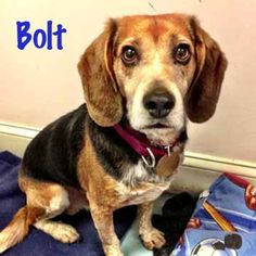 #FurryFriendFriday with Bolt!