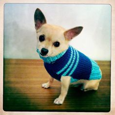 Blue cotton sweater for dog size small by pulldog on Etsy, $35.00
