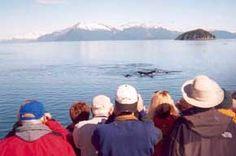 Whale watching in southeast Alaska near Juneau. Photo: Larry Petersen