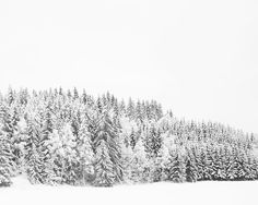Winter snow photograph    rustic home decor by photographybykarina, $30.00