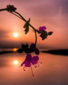 Beautiful Flowers Wallpapers, Beautiful Nature Wallpaper, Beautiful Images, Amazing Sunsets, Amazing Nature, Flower Wallpaper, Wallpaper Backgrounds, Landscape Photography, Nature Photography