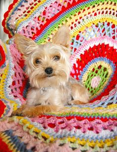 Hopscotch Lane's Summer Doily Blanket and sweet puppy!