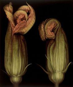 Squash Blossoms II by Larissa Morais