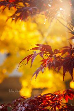 Automne rouge et jaune