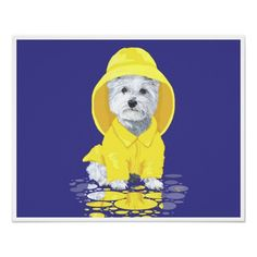 West Highland White Terrier April Showers Print