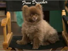 Fran Drescher Talks About Working on TV With Her Dog, Esther   Dogster