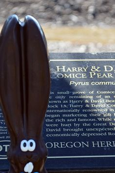Ears visits one of our original pear trees from 1934. #allears #Easter