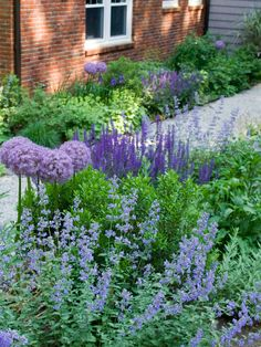 Alliums, Nepeta Catmint, Sage - Love it! purple garden via contemporary landscape by Matthew Cunningham Landscape Design Contemporary Landscape, Landscape Design, Traditional Landscape, Contemporary Design, Back Gardens, Outdoor Gardens, Small Gardens, Cottage Garden Design, Cottage Gardens