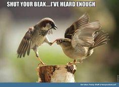 Image result for funny parrot memes