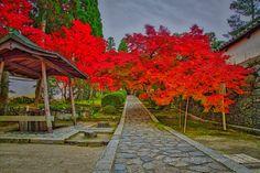 https://flic.kr/p/NeCiVe | Shūon-an Ikkyū-ji, Autumn Buzz in Kyotanabe, Japan. | The approach to the Shūon-an Ikkyū-ji (酬恩庵一休寺) temple, in Kyotanabe, Kyoto.
