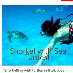 Barbados on ----