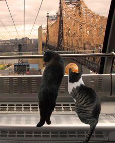Cat Art Print New York City Housewarming Gift by DeborahJulian