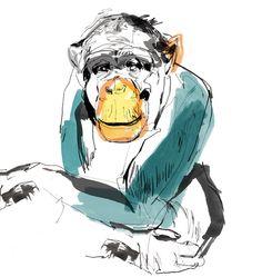 ape illustration - Google Search