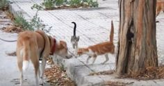 Dog helps feed stray cats!