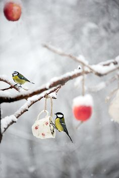 téli madáretetés, madáretető We hang tea cups of suet out for the song birds for the winter solstice at Pi's Cottage. Winter Magic, Winter Snow, Winter Time, Winter Christmas, Pretty Birds, Beautiful Birds, Photo Chat, Winter's Tale, Tier Fotos