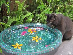 Garden bowl-birdbath?  ground feeder?