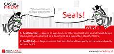 Casual Friday | Zebra Academy | Seal | Native Speaker | Business English | English Grammar | Warszawa