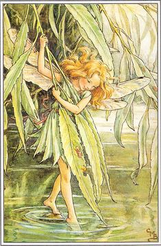 Cicely Mary Barker.  I have nearly all the flower Fairies.  I love them