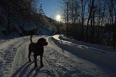 Gårdstunet Hundepensjonat: Korte turer ute i kulda i dag! Snow, Outdoor, Dog, Outdoors, Outdoor Games, The Great Outdoors, Eyes, Let It Snow