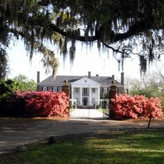 1000 Images About Charleston Boone Hall Plantation 1235 Long Point Road Mt Pleasant Sc On