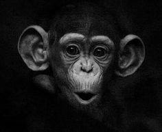Baby Chimpanzee by BorDark Primates, Animals And Pets, Baby Animals, Cute Animals, Wild Animals, Beautiful Creatures, Animals Beautiful, Animals Tattoo, Regard Animal
