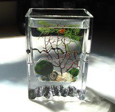Zen Little Wave Marimo Ball Unique Mini by MyZen on Etsy, $64.95